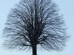 arbre_isolé