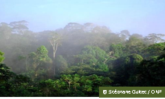foret tropicale brume ONF