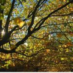 arbre feuille