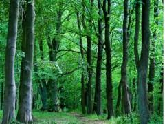 Forêt française